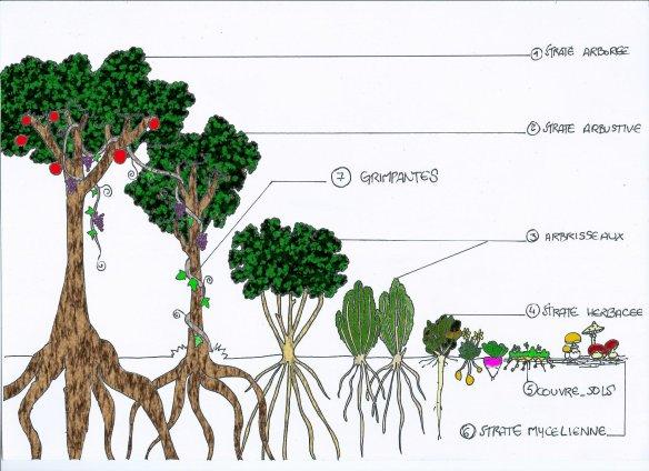 la jardin multiétagé Jardin-forc3aatcouleur
