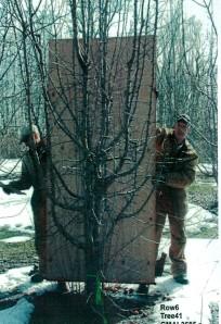 Cet arbre a entre 3 et 4 ans...