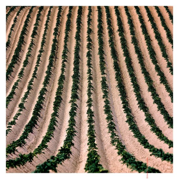 agricultural_optimisation_by_eintoern-d8zw804